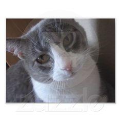 Gray and White Cat Print Art Photo