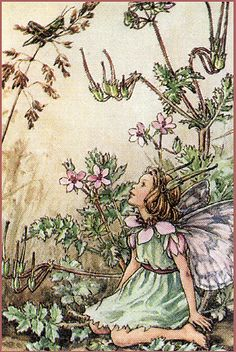 Pink's Fairy It seems very Cicely Mary Barker to me, but I love the illustration overall and the characters within it.