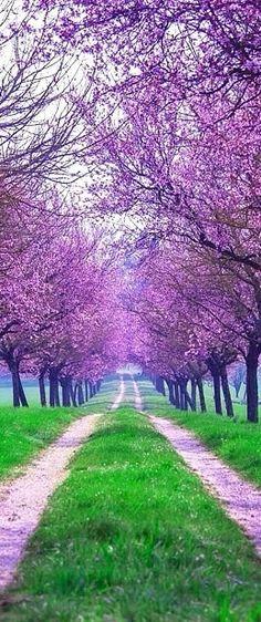 Wow! Natura to najpiękniejsze dzieło sztuki - ciągle nas zachwyca swą urodą   www.shakeit.pl