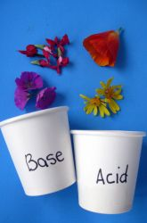 Test for Acids or Bases Using Flowers!--  Conduct a simple science experiment to see if flowers from your garden pass the acid-base indicator test. It's chemistry, but it looks like magic!