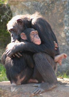 abrazo mono
