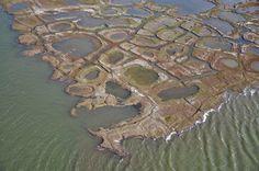 Cartoline dall'Alaska: alla scoperta della costiera dall'elicottero - Tra Fish Creek e il canale di Nechelik, Baia di Harrison