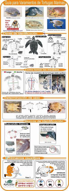 Guía para Varamientos de Tortugas Marinas  I wish it was in English