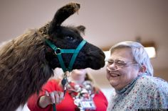 therapy llamas at healing center