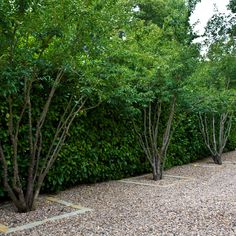bricks in gravel provide just a bit of a defining feature around the trees - easy and subtle