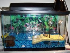 red eared slider tank ideas - Google Search                                                                                                                                                      More