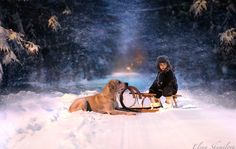 Astonishing Photos of Winter by Elena Shumilova