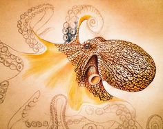 Progress pic 2 of my Octopus in Colored Pencil and ink. See all the work and buy prints of my work at https://www.etsy.com/shop/timjeffsart