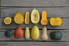 Winter Squash Varieties <3 Delicious & Healthy! <3 From left to right: Acorn, Red Kuri, Delicata, Spaghetti, Butternut & Buttercup! Btw, you can usually get delicata squash at Trader Joe's in the fall for 99 cents! YUM! #MyVeganJournal