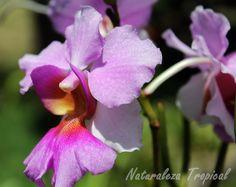 Flor de una especie del género Vanda