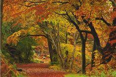 Stunning autumn show