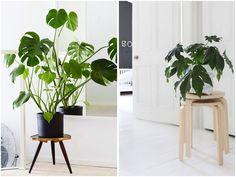 plant stools