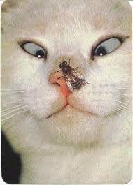 """Результат пошуку зображень за запитом """"кошки и коты картинки нарисованные"""""""