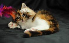 Cats Image Hd Hd Background Wallpaper 38