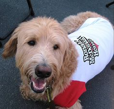 Best volunteer / staff member - Jerry the Dog at RMHC of the Upper Midwest