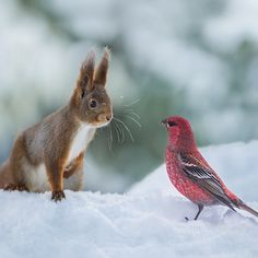 Norway, squirrel and bird.