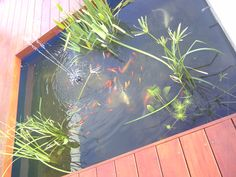 Cape Town, Garden Landscaping, Pond, Aquarium, It Is Finished, Fish, Front Yard Landscaping, Fish Stand, Water Pond