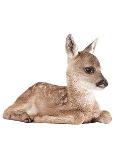 Muursticker van schattig hertje van 40 x 33 cm. Leuk voor de kinderkamer. Bestel de muurstickers van allerlei leuke dieren uit het bos.