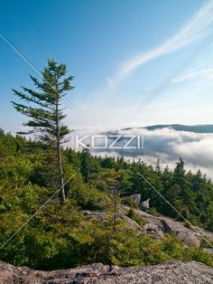 low angle view of pine tree with mountain range and clouds in background. - Low angle scenic view of pine tree with mountain range and clouds in background.