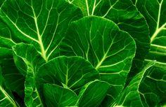 Informação Nutricional - Couve cozida: Calorias, gordura total, sódio, carboidratos, fibra, açúcar, proteína, zinco, fósforo, ferro, cálcio, tiamina, vita..