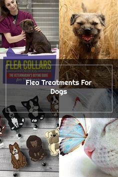Veterinarian's Guide on Flea Collars for Dogs. Best Flea Collar For Dogs |  Flea Treatment For House  | Dog Fleas Symptoms | Bayer Advantus Soft Chews. #dogsofinstagram #Top Dog Tips. To view further for this article, visit the image link.
