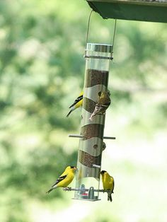 Provide Bird Feeders Year-Round - Many bird enthusiasts bring out their feeders only during the cold months when birds benefit the most from free handouts. But spring and summer feeding offers big rewards, too. By keeping feeders filled year-round, you get loyal patrons.