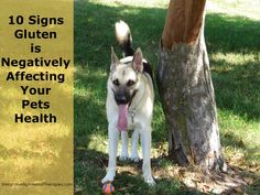 10 Signs Gluten is Negatively Affecting Your Pets Health -
