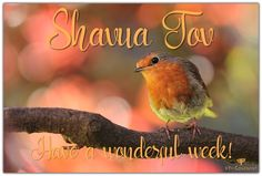 New Week Quotes, Shabbat Shalom Images, Shavua Tov, Yom Teruah, Matthew 15, Eternal Salvation, Feast Of Tabernacles, Revelation 12, The Lost Sheep