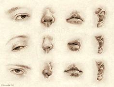 Facial Features by =ArandaDill