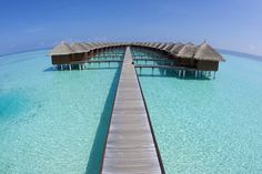 Will go back to the Maldives for this (Maafushivaru Hotel)