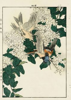 Flycatcher, Deutzia from Imao Keinen Kacho original Japanese woodblock prints of birds and flowers