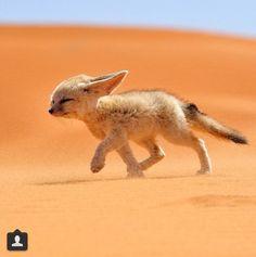 Woestijn !!
