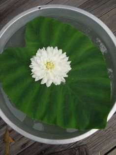 stick a flower into a large leaf and float it