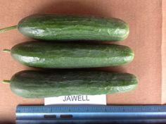 Jawell Persian Cucumber, Trials, Vegetables, Food, Essen, Vegetable Recipes, Meals, Yemek, Veggies