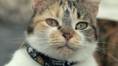 Swedish Scientists Are Studying Cats to Better Learn How They Communicate - World's largest collection of cat memes and other animals Animals Images, Animals And Pets, Funny Animals, Cute Animals, Beautiful Cats, Animals Beautiful, Cat Info, What Cat, Animal Science