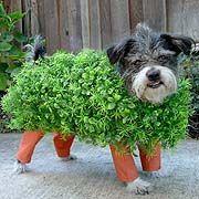 Chia Pet Costume! : )
