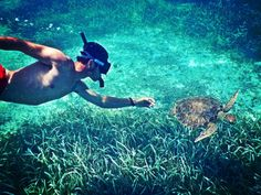 #Snorkel the southern portion of the #Belize  #BarrierReef from #Placencia and spot #GreenSeaTurtles and lots of other amazing marine creatures