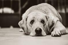 Sad, Dog - Free images on Pixabay
