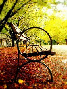 #fall #nature #beauty #orange #leaves #yellow #green