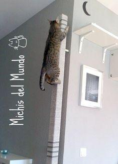 Cat climbing post #catsdiyclimbing