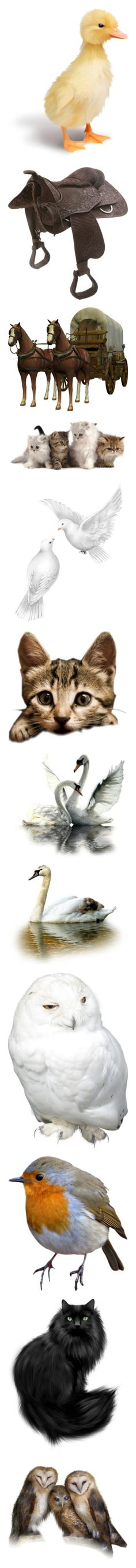 """Animals"" by katlittlestar ❤ liked on Polyvore featuring animals, easter, birds, ducks, backgrounds, horses, farm, western, saddles and pets"