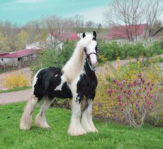 magnifique cheval bien brossé