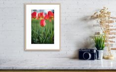 Kids Room Wall Art, Home Decor Wall Art, Nursery Wall Art, Modern Art Prints, Wall Art Prints, Poster Prints, Photography Photos, Nature Photography, Lego Pictures