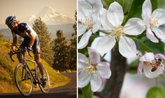 The quiet country backroads of the Hood River Valley make for great road biking. Winding through them in the spring, you'll witness an explosion of cherry, pear and apple blossoms.  We have recently been recognized as a Bike Friendly Business through @Travel Oregon #hoodrivervalley
