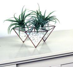 Hexágono geométrica moderna moda cristal terrario teñido de
