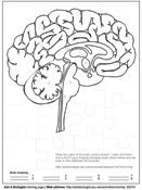 Human anatomy coloring pages... Looks like the left hemisphere here so only right-handed people can color this one. :-P