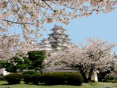 Ten Thousand Trees: Japanese Sakura at Himeji Castle