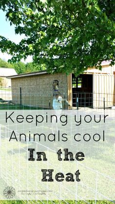 It is so important to make sure animals stay cool in the heat and have a place to get out of the sun. Here are some great tips to ensure your animals stay cool even in the extreme heat.
