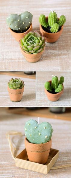 cactus candle lights in teapot holders wedding favor ideas