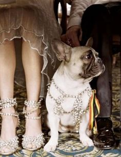 c5b902531 Find images and videos about shoes, dog and diamonds on We Heart It - the  app to get lost in what you love.